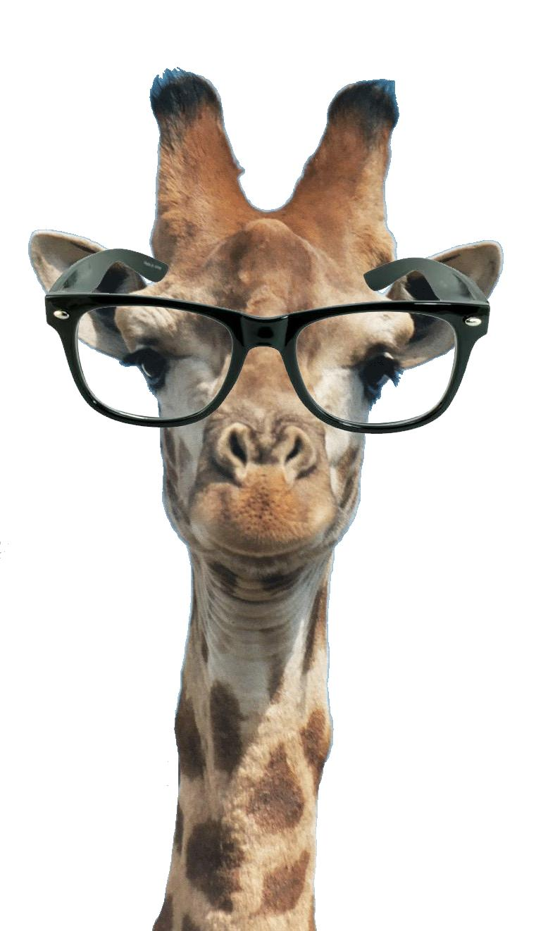 Giraffe With Glasses On Drawing
