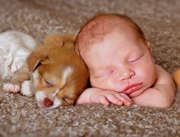 dog_and_baby_sleep_pals