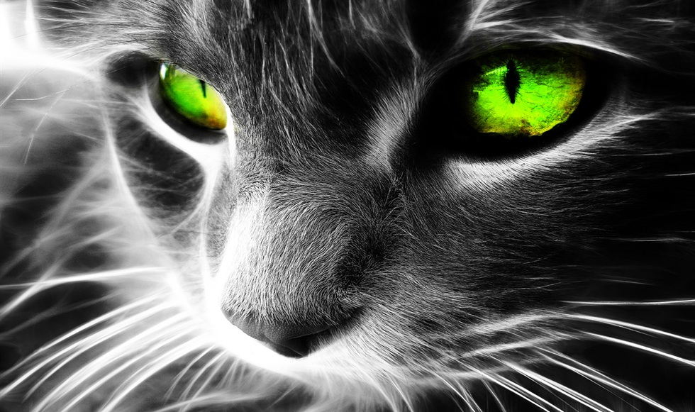 cats-mystical-green-eyes-close-up-preview